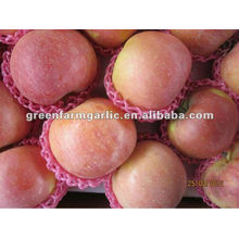 new crop china supplier apple fruit price