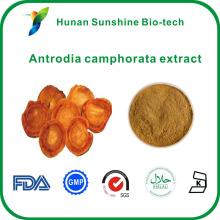 10% 30% полисахаридов, УФ Антродия camphorata Антродия экстракт Camphorata