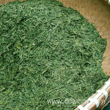 Customized for Pure Green Tea Green tea where to buy export to Iraq Importers