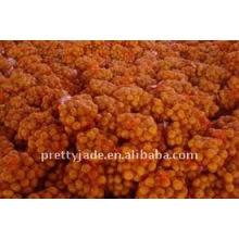 Grossiste chinois frais en gros Mandarin