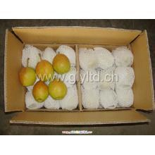 Poire parfumée fraiche chinoise à vendre