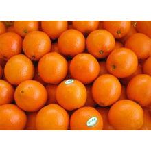 chinese sweet Mandarin orange in 2012