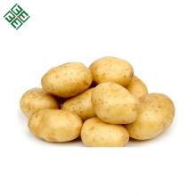 pomme de terre fraîche de qualité / pommes de terre fraîches organiques / pomme de terre de diamant du Bangladesh