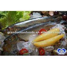seafood frozen herring fillets(clupea Harengus)