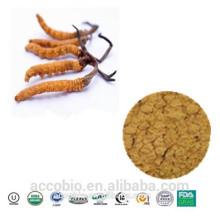 Polvo orgánico del extracto de Militaries de Cordyceps de la alta calidad el 100% natural