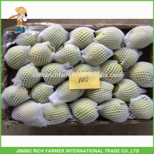 Niedriger Preis Frische Shandong Birne
