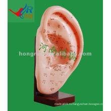 HR-508A Антикварная акупунктура уха Модель 22CM, акупунктурное ухо