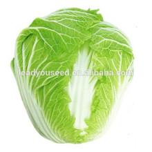 MCC05 Ganfu 50 jours résistant à la chaleur hybride f1 graines de chou chinois, graines de légumes chinois