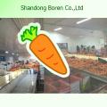 Свежие овощи Свежие морковь S / M