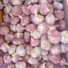 2019 Best Fresh Natural Garlic Bei