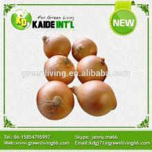New crop Fresh Sweet Onion