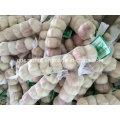 Neue Jahreszeit Chinesische frische Knoblauch Normal Weiß & Rein Weiß