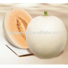 MSM061 Baiyu haute production pure hybride blanc graines de melon pour la plantation