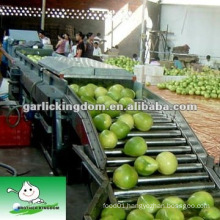 new crop fresh honey pomelo from China