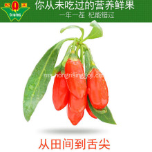 220 gandum / 50g New Harvest Goji berry