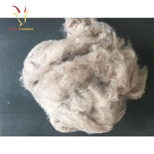Pure Mongolian Cashmere Raw Sheep Wool Finest Cashmere In The World For Sale