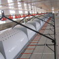 Automatic Layer Chicken House with Cages and Equipments
