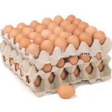 Molde de pulpa de bandeja de huevo