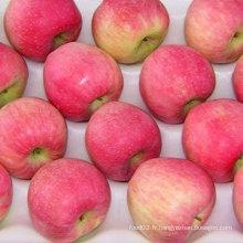 Prix du marché des fruits du dubai pomme