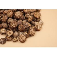 High Quality Dried Flower Mushroom Wholesale