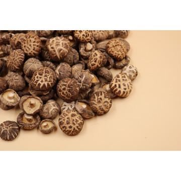 Vente en gros de champignons de fleurs séchées de haute qualité