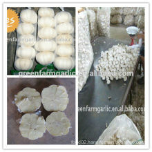 white garlic in high quality