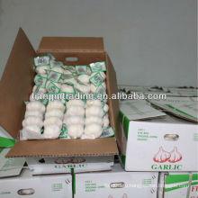 Чеснок упакованный мешком сетки & коробка