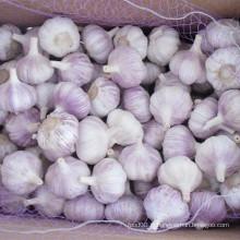 Fresh New Crop Normal White Garlic for Brazil Market