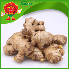 Factory supply ginger, Chinese fresh ginger supplier