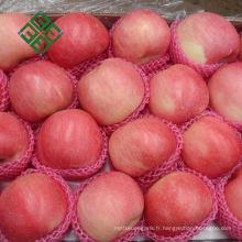 haute qualité chinois fuji pomme pomme fraîche