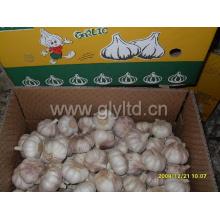 Good Qualty Chinese Fresh Normal White Garlic