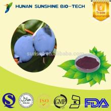 Poudre de myrtille fraîche 100% de fruits naturels Extrait de myrtille / Vaccinium myrtillus L. / Anthocyanidines 25%