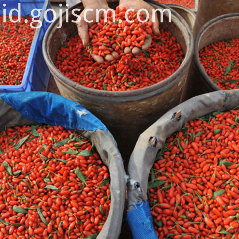 Fresh Goji Concentrated Juice