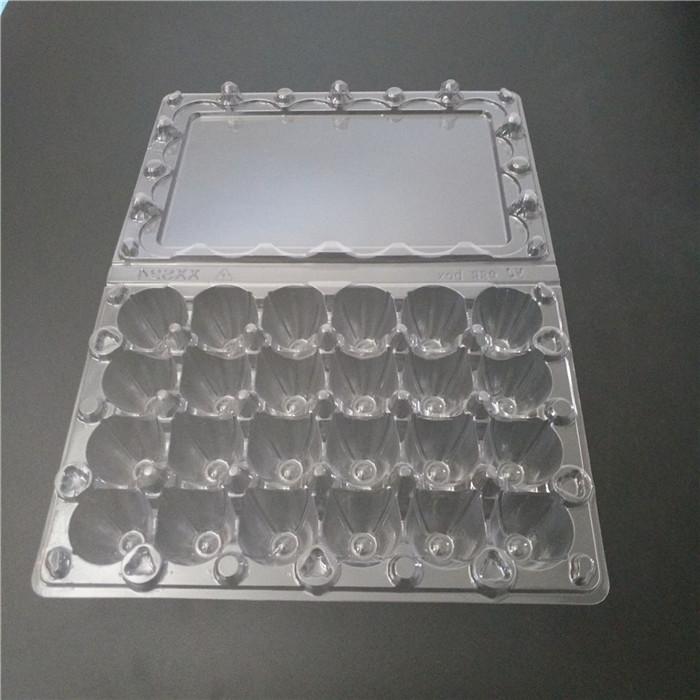 Coturnix Eggs PVC Container