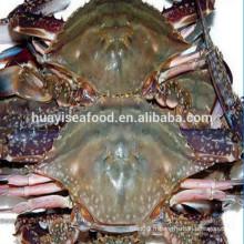 Types de taille de crabe de natation bleue de haute qualité congelée