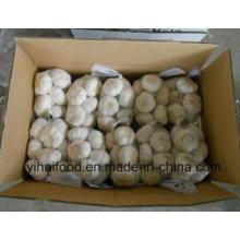 China Alho branco puro fresco