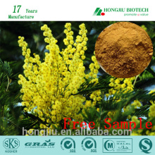 Acacia rigidula extract powder 10:1