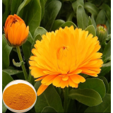 Natural water soluble Calendula marigold extract,Cas:84776-23-8