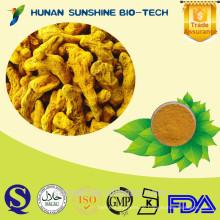 Nahrungsergänzungsmittel natürliche Kurkuma Pulver / Kurkuma-Wurzel / Kurkuma-Wurzel-Extrakt-Pulver