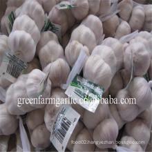 fresh normal white garlic and pure white garlic in 3pcs