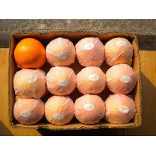 Obst Orange Pulpy Saft von 250ml trinken Saft