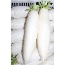 Новый урожай свежий белый редис