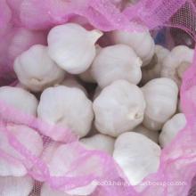 Supplying Fresh Pure White Garlic