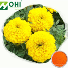 Polvo de luteína con extracto de flor de caléndula