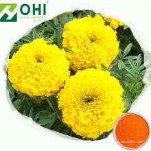 Extrait de fleur de souci Poudre de lutéine