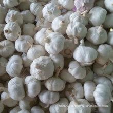 Exportierte Standardqualität von frischem weißem Knoblauch