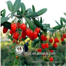 Dried fruit goji berries/goji plants/Medlar/organic goji berries