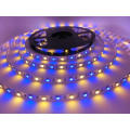 DC12V Flexible RGBW waterproof LED strip light with factory price