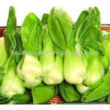NPK08 Sihai baicai sementes para venda, sementes de repolho