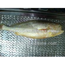 Frozen Yellow Croaker (whole round) Fish
